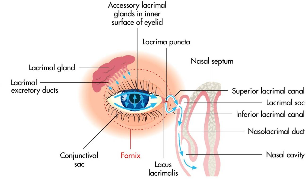 Normal tear flow